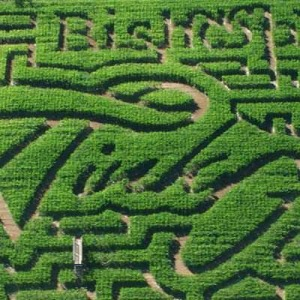 Corn maze at the Bishop's Pumpkin Patch in Wheatland, CA