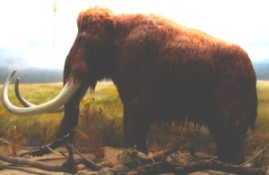 «Mammoth-ZOO.Dvur.Kralove» par Mistvan — Travail personnel. Sous licence Creative Commons Attribution-Share Alike 3.0-2.5-2.0-1.0 via Wikimedia Commons